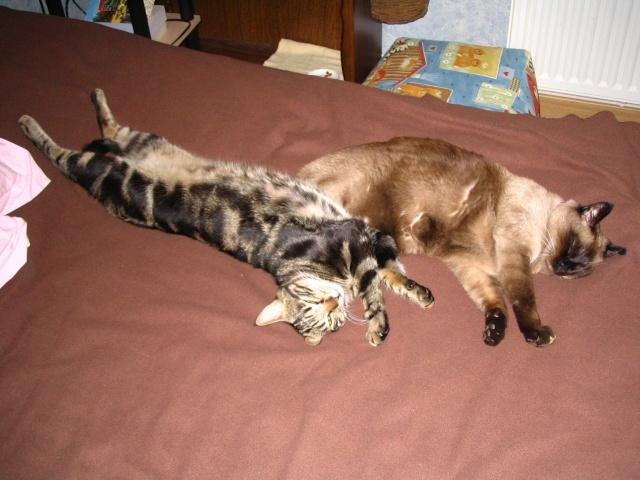 2 nouveaux chatons à la maison + photos d'Eden Img_1310