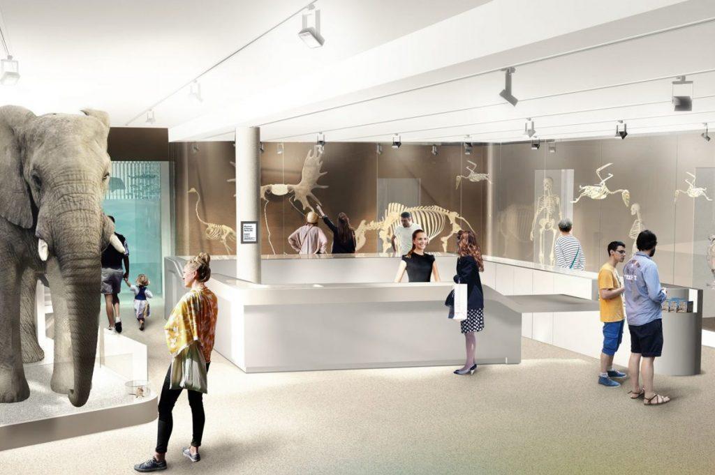 Muséum d'histoires naturelles de Bordeaux Museum11
