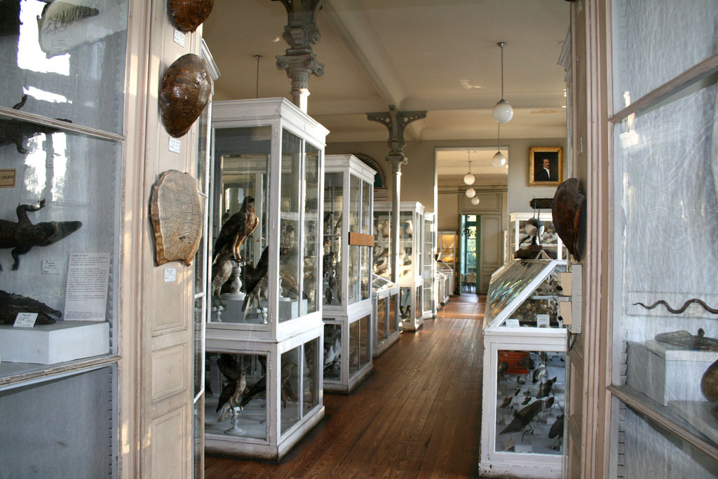 Muséum d'histoires naturelles de Bordeaux Vitrin10