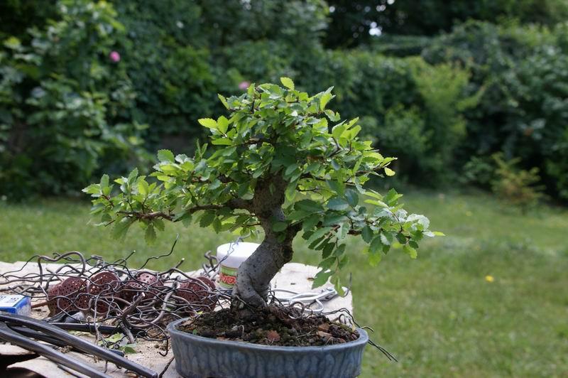Histoire d'un petit orme de jardinerie Resize15