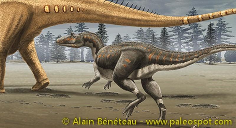 Paleontologie, l'actu... Allosa10