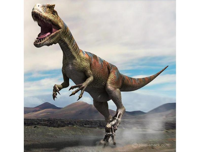 Paleontologie, l'actu... - Page 2 Allosa11