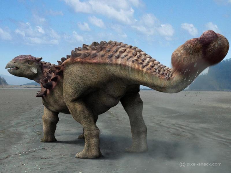 Paleontologie, l'actu... - Page 2 Ankylo10