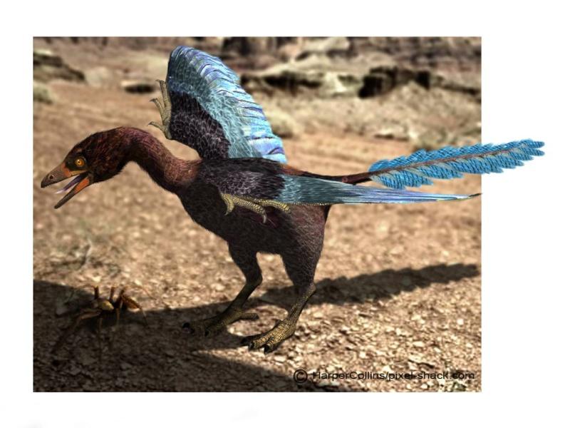 Paleontologie, l'actu... - Page 2 Archae10
