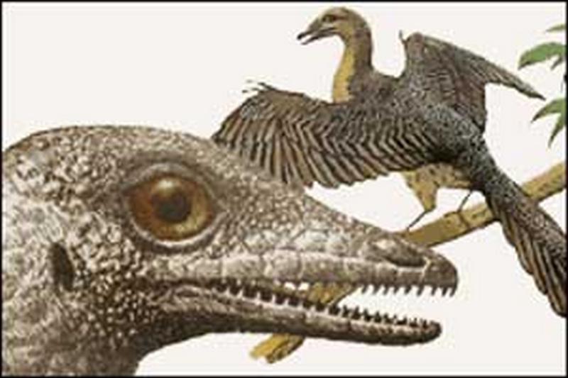 Paleontologie, l'actu... - Page 2 Archeo12