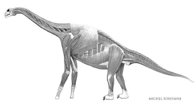 Paleontologie, l'actu... Atlasa11