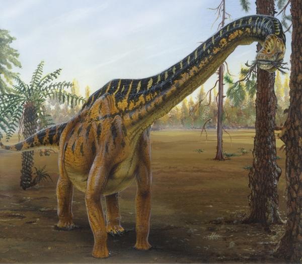 Paleontologie, l'actu... Brachi10