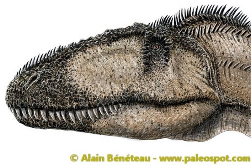 Paleontologie, l'actu... Carcha10