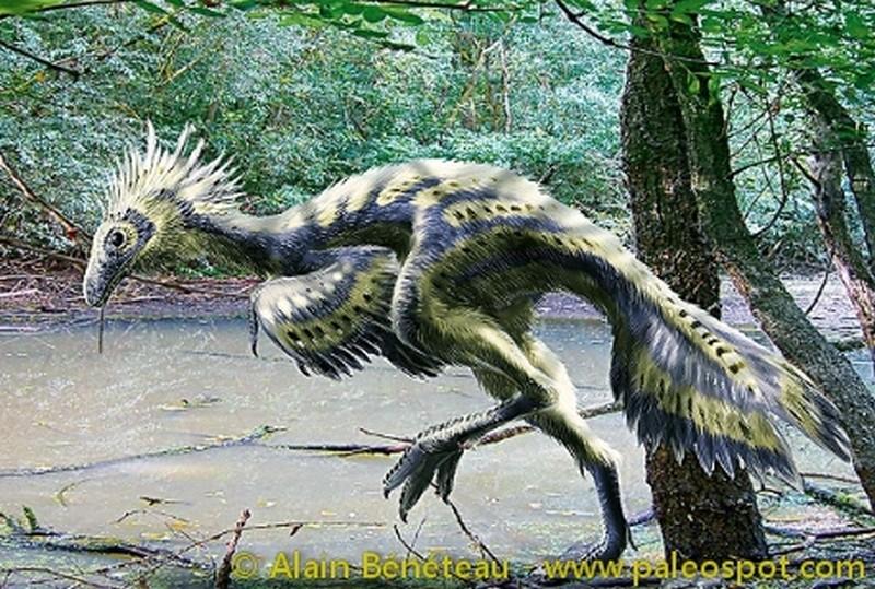 Paleontologie, l'actu... Caudip10
