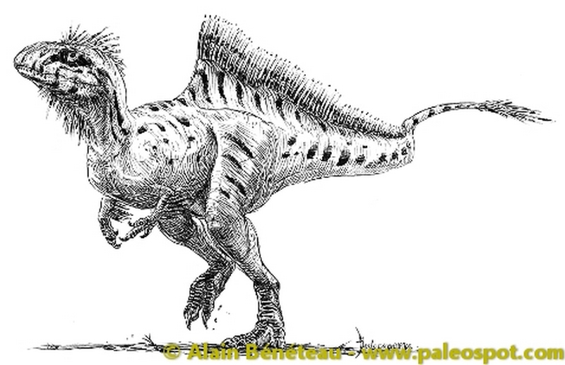 Paleontologie, l'actu... Concav10