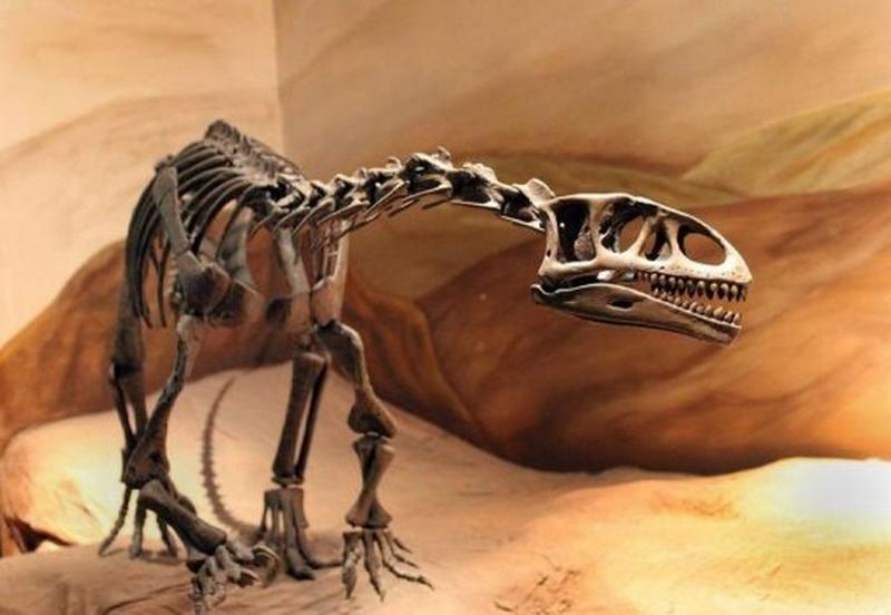 Paleontologie, l'actu... - Page 2 Dino_l10