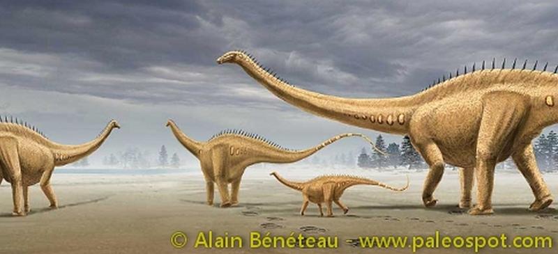 Paleontologie, l'actu... Diplod10