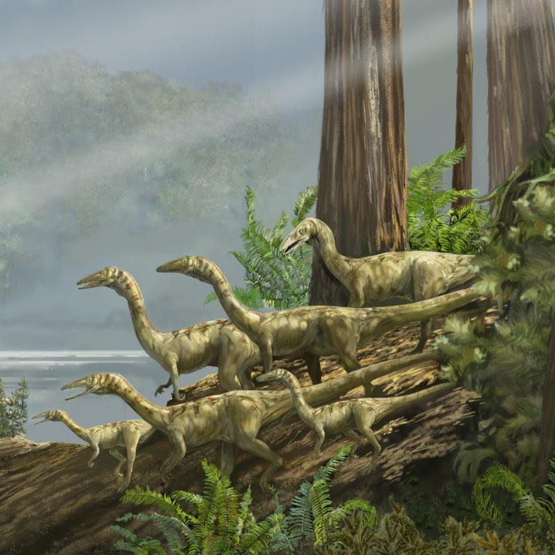 Paleontologie, l'actu... - Page 2 Karen_10