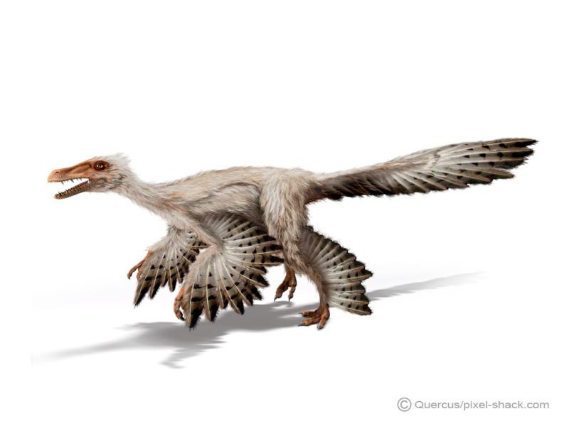Paleontologie, l'actu... - Page 2 Micror10
