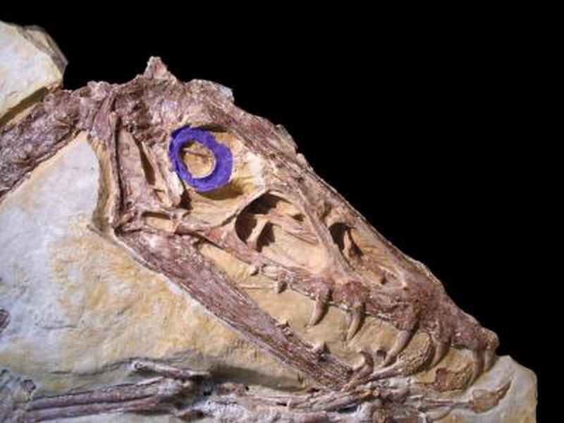 Paleontologie, l'actu... - Page 2 Pteros10