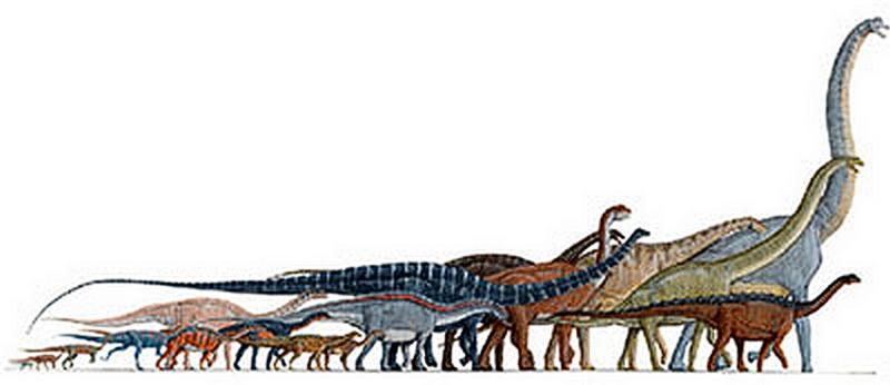 Paleontologie, l'actu... Rtema109