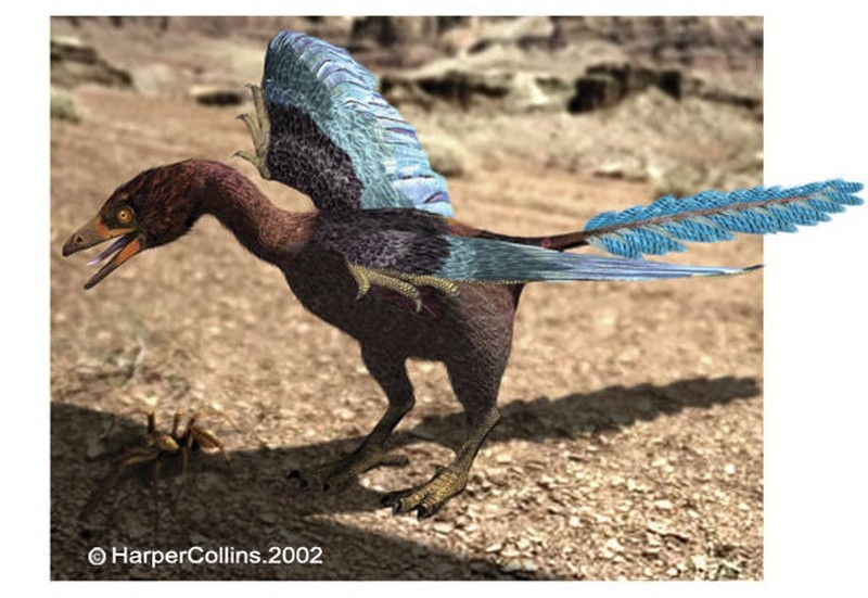 Paleontologie, l'actu... Rtema119