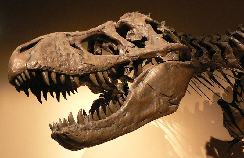 Paleontologie, l'actu... - Page 2 Rtema121