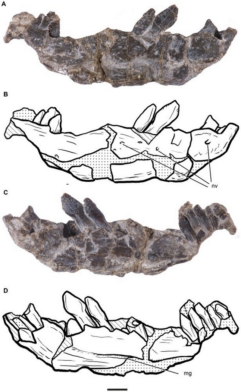 Paleontologie, l'actu... - Page 2 Rtema197