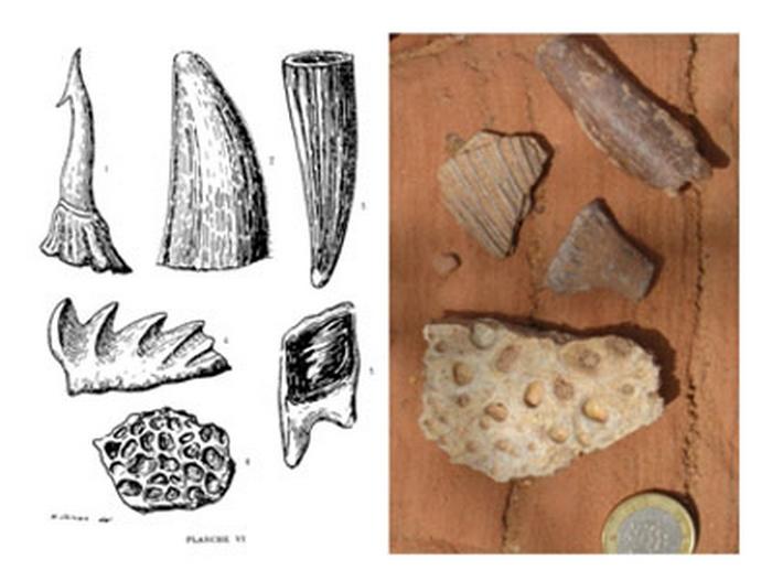 Paleontologie, l'actu... - Page 2 Rtema214