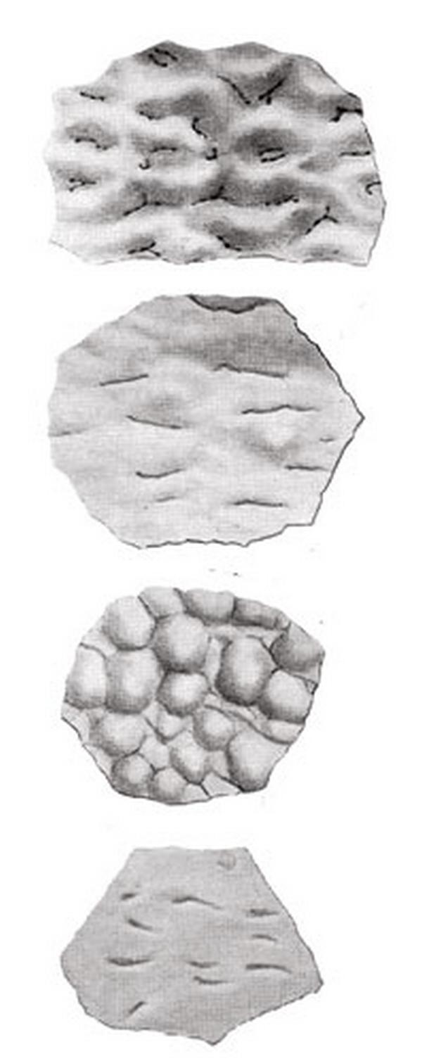 Paleontologie, l'actu... - Page 2 Rtema225