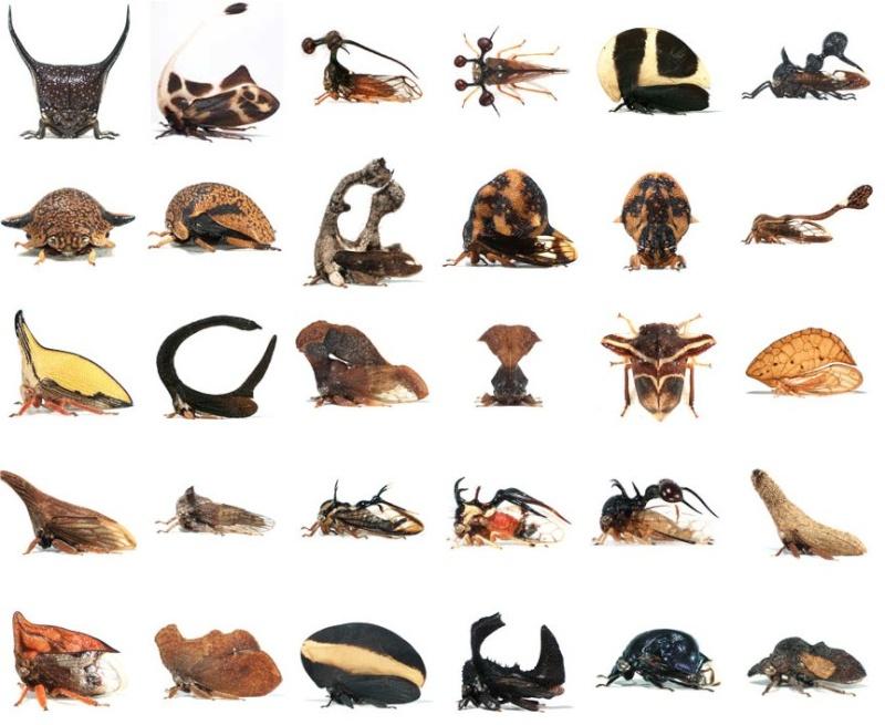 Zoologie... Rtema245