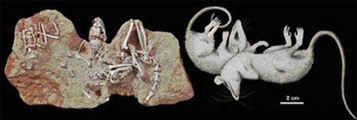 Paleontologie, l'actu... - Page 2 Rtema279