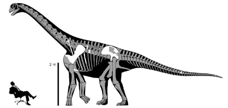 Paleontologie, l'actu... Rtemag10