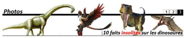 Paleontologie, l'actu... Rtemag12