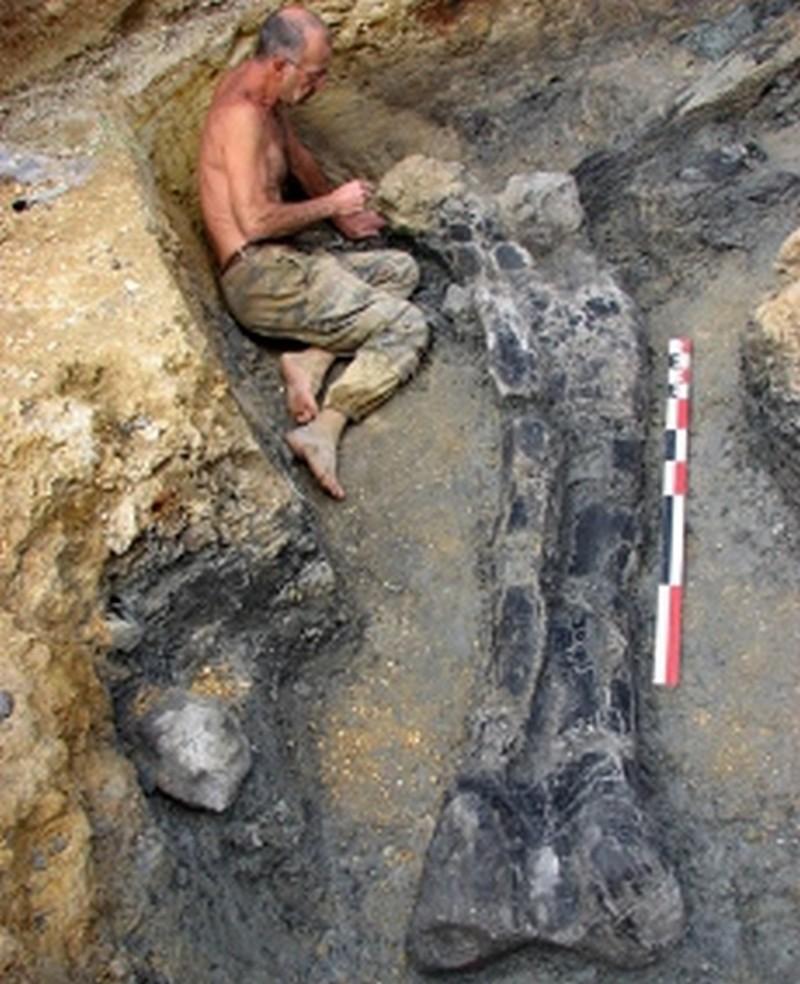Paleontologie, l'actu... Rtemag16