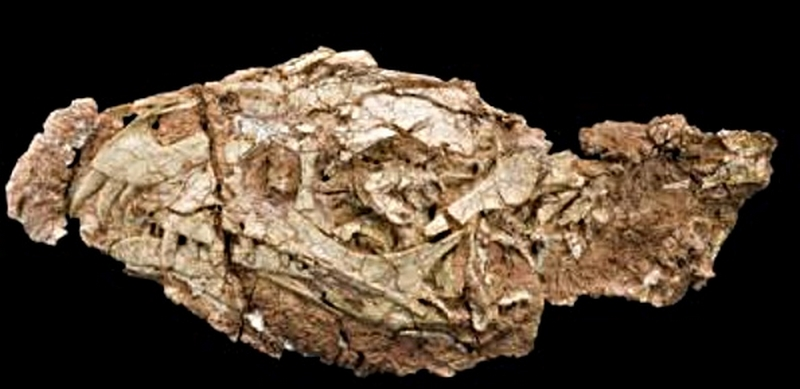 Paleontologie, l'actu... Rtemag33