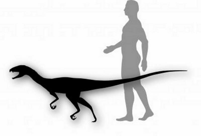 Paleontologie, l'actu... Rtemag34
