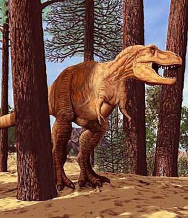 Paleontologie, l'actu... Salome11