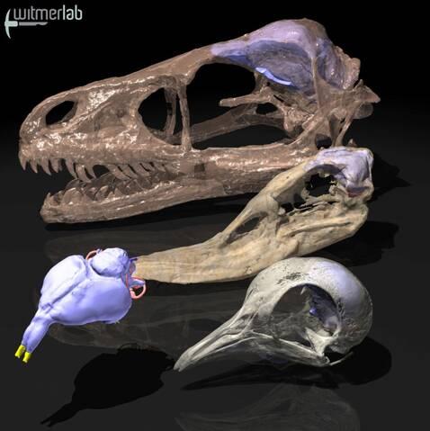Les paléontologues ont trouvé des fossiles remontant à 3,6 milliards ans. ceux-ci ressemblent étroitement