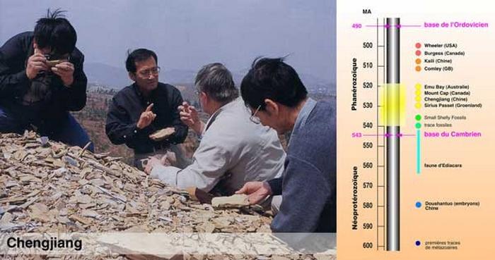 Paleontologie, l'actu... - Page 2 Vannie10