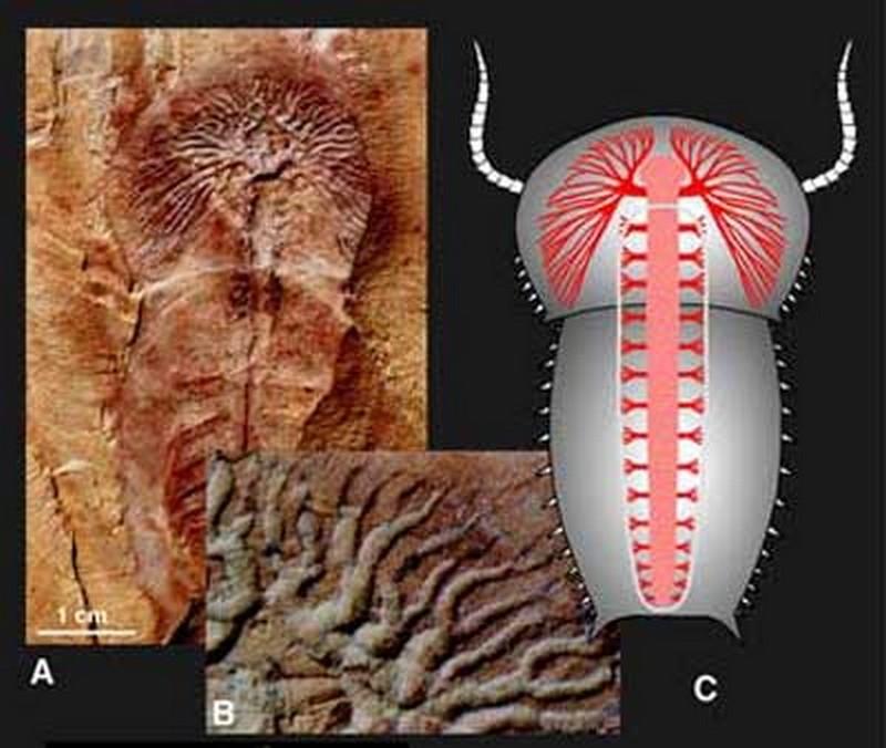 Paleontologie, l'actu... - Page 2 Vannie13