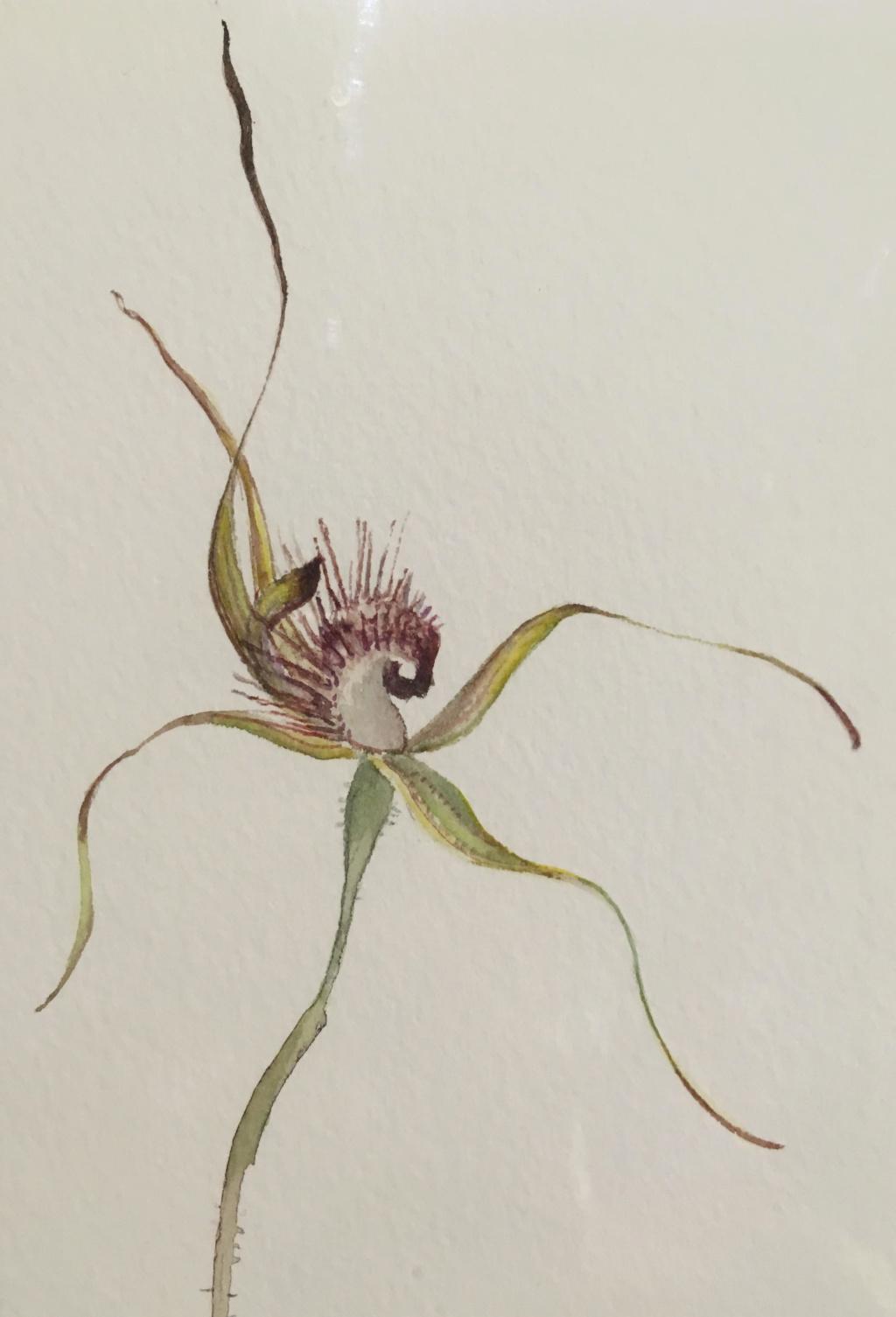 Quelques orchidées du Sud Ouest Australien - Page 5 Unname10