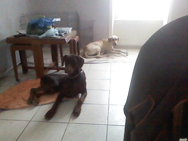 """Le team """"des chiens, des sport, une seule passion"""" Image110"""