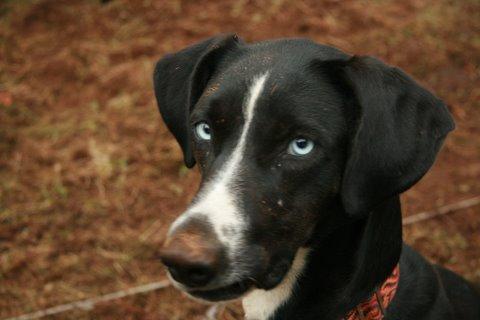 Bétises au jour le jour de nos chiens :-( - Page 6 Img_0510