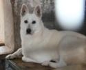 wolf 9 ans (72) Bc_61011