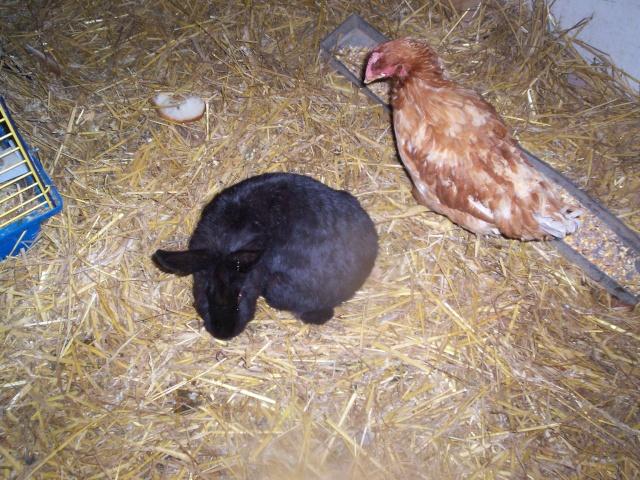 CERISE adorable lapine 100_3545