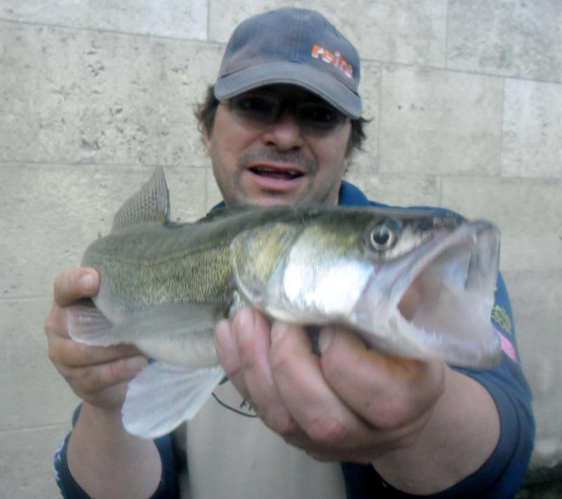 quelques poissons de ces derniers temps ......!!!! Sam_0114