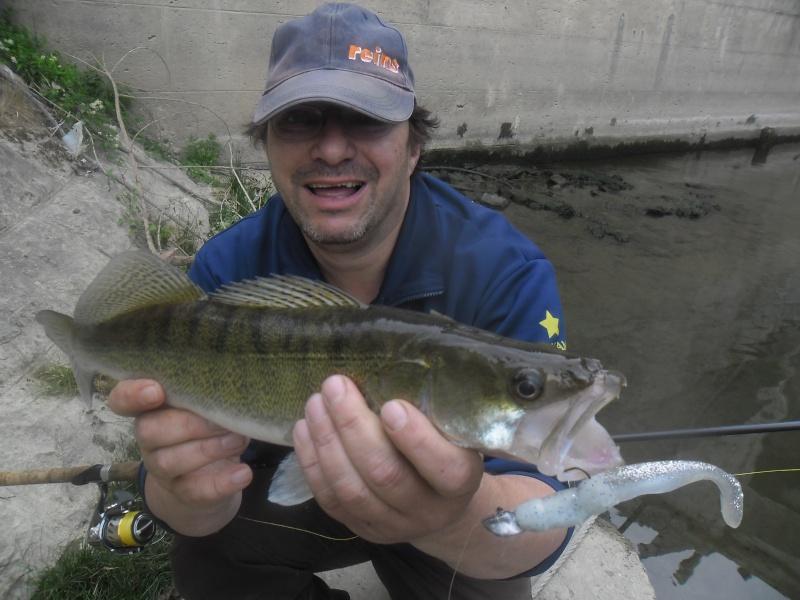 quelques poissons de ces derniers temps ......!!!! Sam_0127
