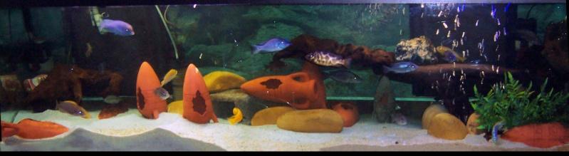 Aquarium 600 litres de tyrano34 100_4611