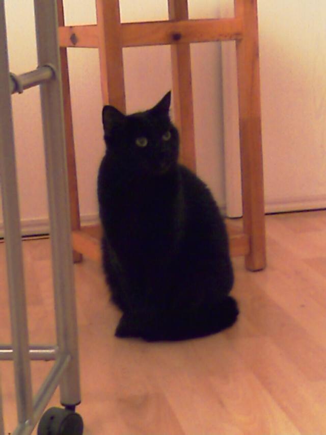 Mila, noire, 4 ans Imag0010