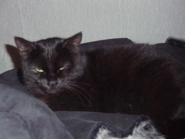 Mila, noire, 4 ans Pb122110