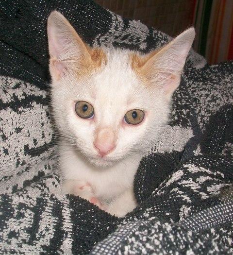 Ayuda para 3 gatitos de 2 meses. Los regalarán en un mercadillo Murcia 100_6610