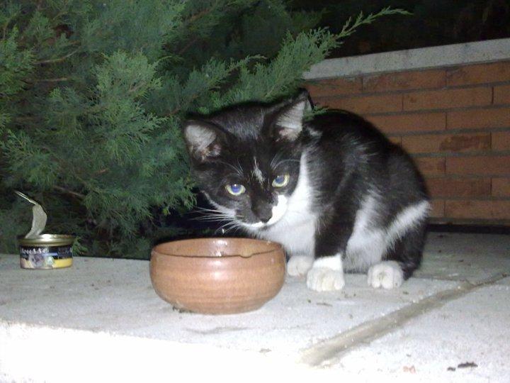 Chiqui,gatito de 3 meses en la calle en grave peligro Madrid Chiqui10