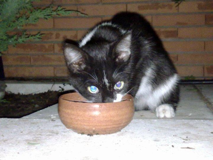 Chiqui,gatito de 3 meses en la calle en grave peligro Madrid Chiqui11
