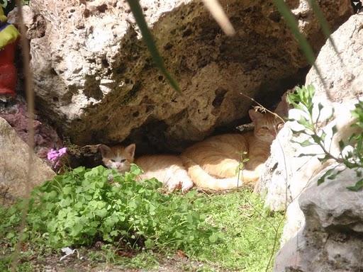 Mamá gata naranjita y su bebé abandonados en jardines Madrid Legane13